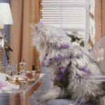 Schluss mit dem Katzenjammer! (Sponsored)