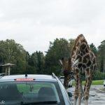 Ausflug in den Serengeti Park – das solltest Du unbedingt beachten!