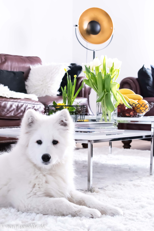 Hund im Haus oder Garten