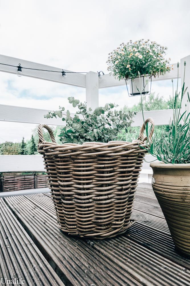 Pflanzen Terrasse