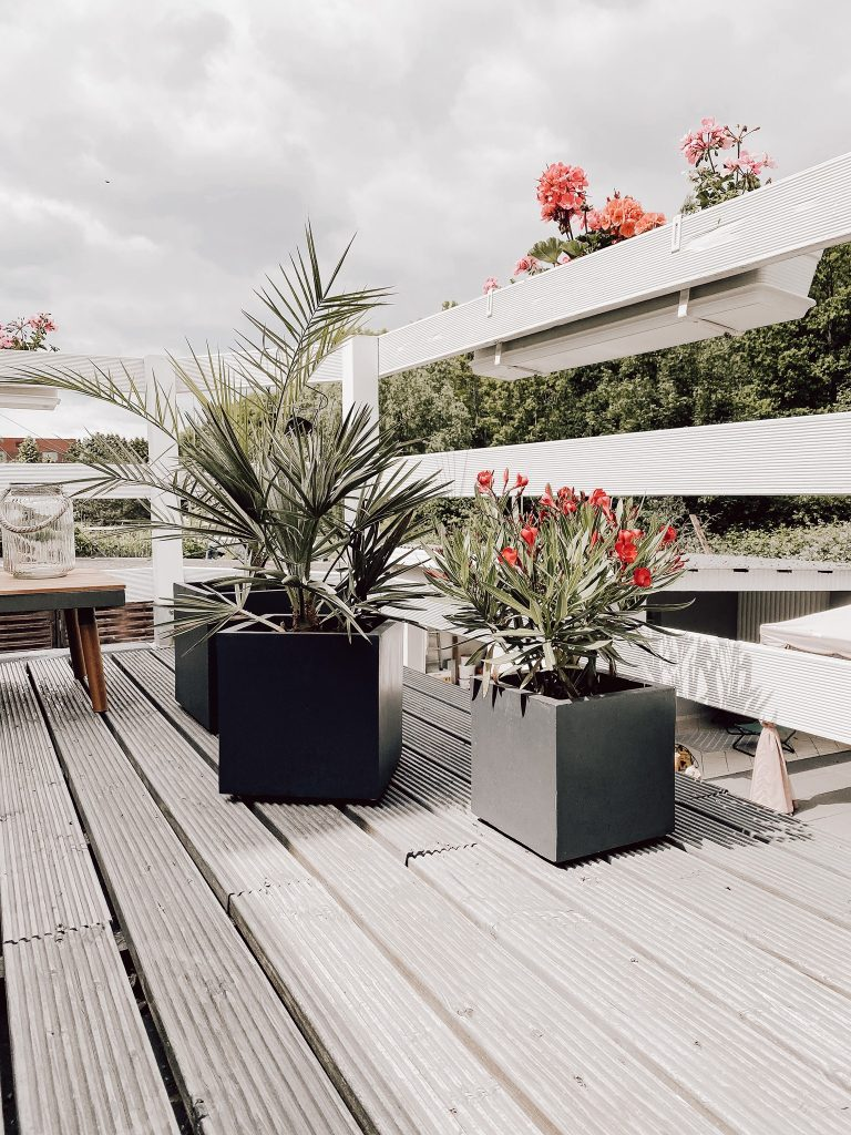 Blume Terrasse Palme